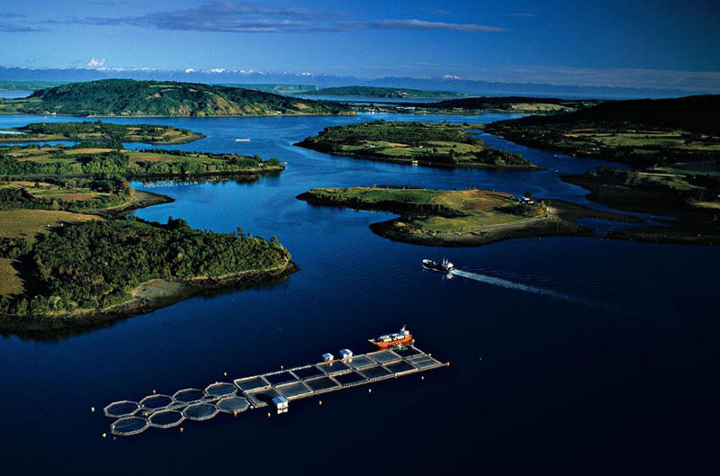 salmon farm near mechuque in the chauques islands chile 25 Mind Blowing Aerial Photographs Around the World