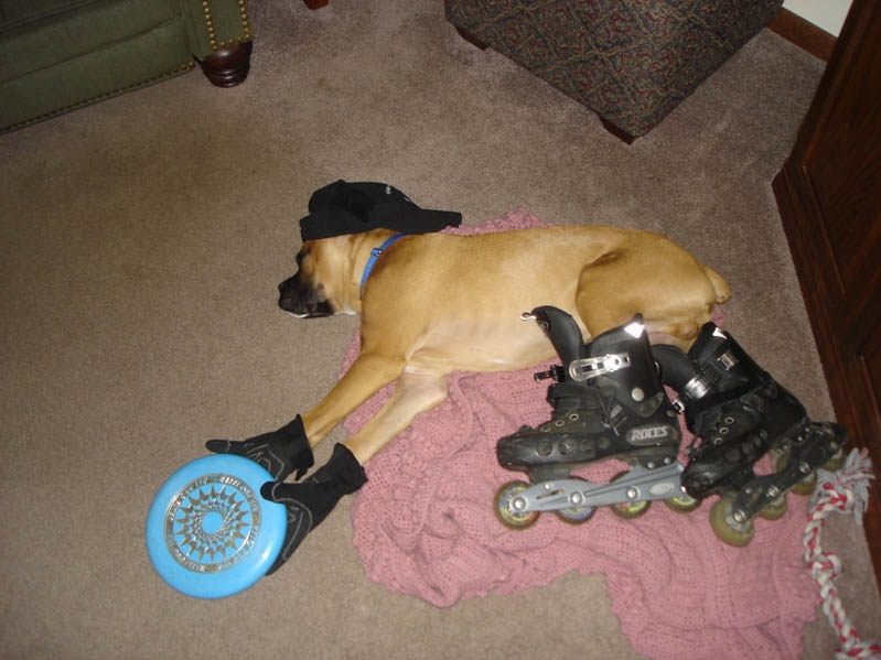 dog passed out wearing skates gloves hat frisbee The Friday Shirk Report   Volume 106