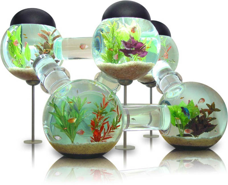 Picture of the Day: The LabyrinthAquarium