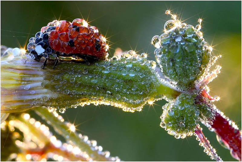 Picture of the Day: Morning Dew