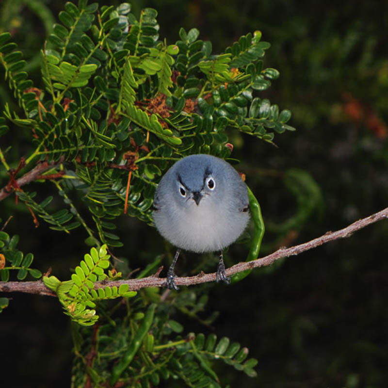 Picture of the Day: Real-Life AngryBird
