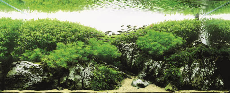 10 li da wei china The Top 25 Ranked Freshwater Aquariums in the World