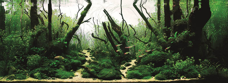 11 wang chao china the top 25 ranked freshwater aquariums in the world