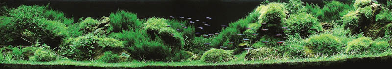 13 chonladar rattanawichien thailand The Top 25 Ranked Freshwater Aquariums in the World