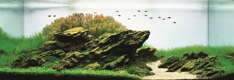 15 quoc hung vu vietnam The Top 25 Ranked Freshwater Aquariums in the World
