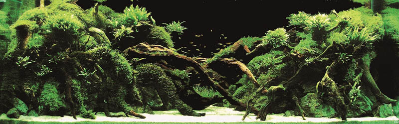16 kazutaka murase japan The Top 25 Ranked Freshwater Aquariums in the World