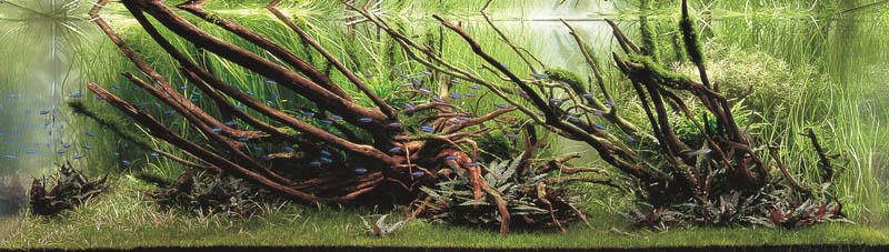 17 koji nakamura japan The Top 25 Ranked Freshwater Aquariums in the World