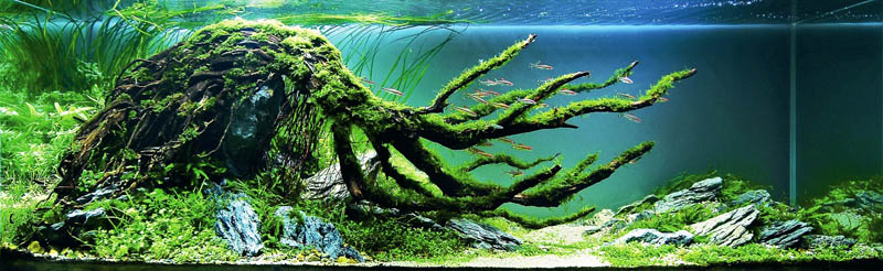 18 chow wai sun hong kong the top 25 ranked freshwater aquariums in the world - Freshwater Aquarium Design Ideas