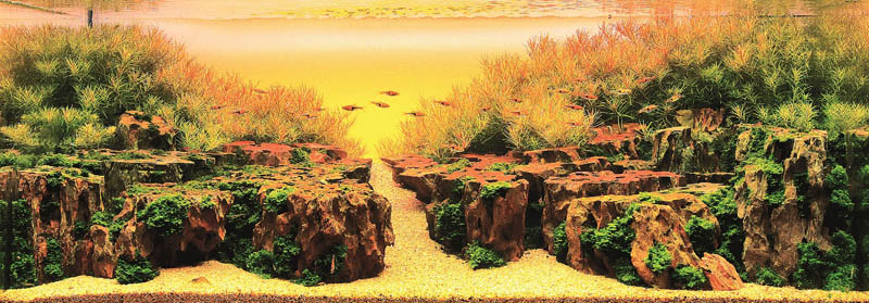 2 gold prize zhang jian feng macau Jaw Dropping Plant Sculptures from Mosaiculture International 2013