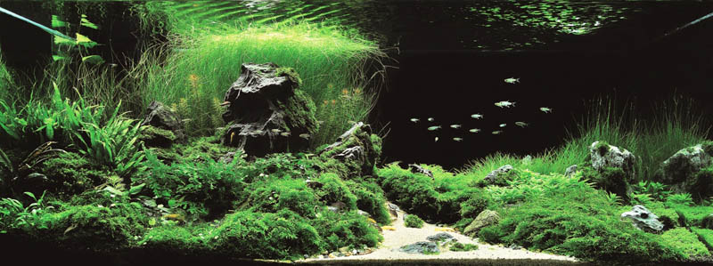 21 jiang wei china The Top 25 Ranked Freshwater Aquariums in the World