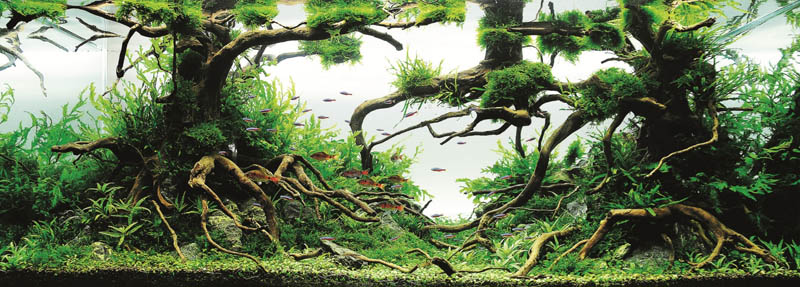 22 michael gw wong hong kong the top 25 ranked freshwater aquariums in the world - Freshwater Aquarium Design Ideas
