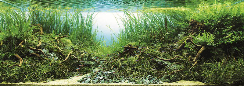 23 hironori handa japan The Top 25 Ranked Freshwater Aquariums in the World