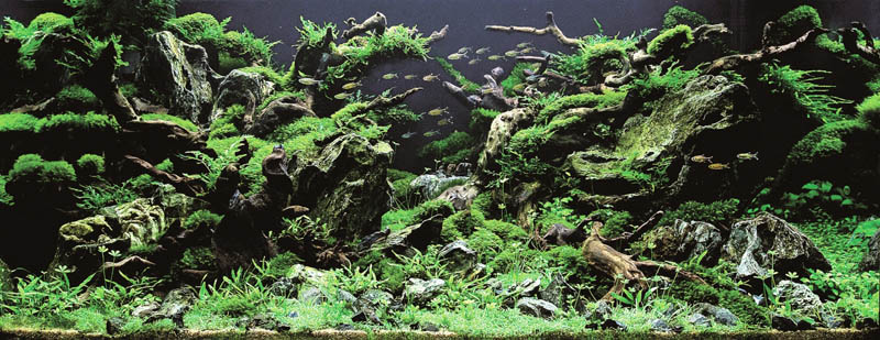 24 lee do jae korea The Top 25 Ranked Freshwater Aquariums in the World