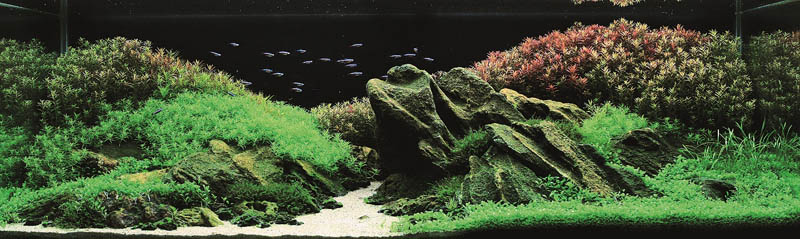 3 silver award xuan thuy nguen thi vietnam The Top 25 Ranked Freshwater Aquariums in the World