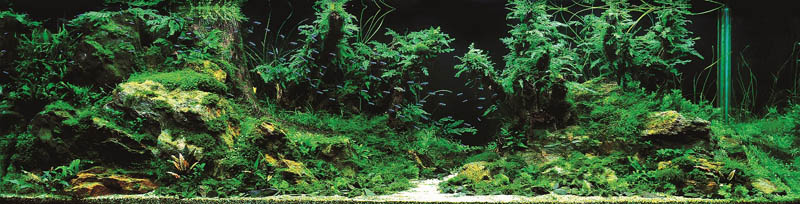 6 bronze award chen i sheng taiwan The Top 25 Ranked Freshwater Aquariums in the World