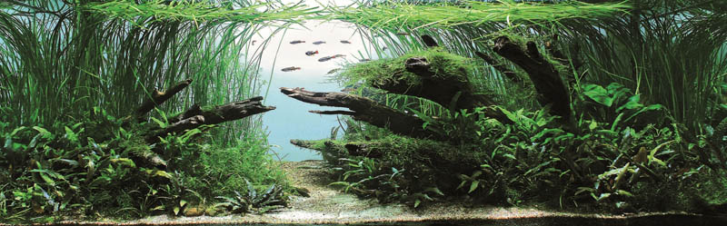 7 bronze award gregory polishchuk ukraine The Top 25 Ranked Freshwater Aquariums in the World