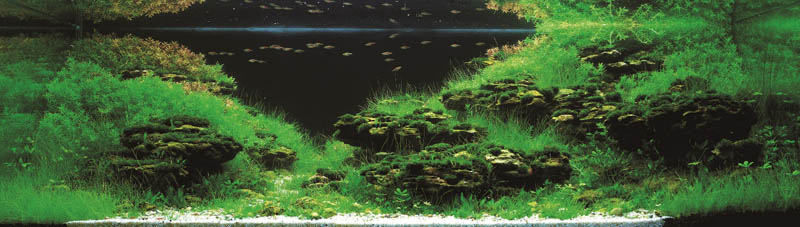 8 long tran hoang vietnam The Top 25 Ranked Freshwater Aquariums in the World