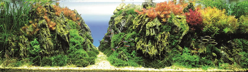 9 kpwong hong kong The Top 25 Ranked Freshwater Aquariums in the World