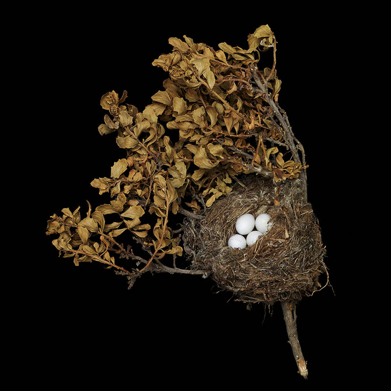 american goldfinch sharon beals 25 Stunning Photographs of Birds Nests
