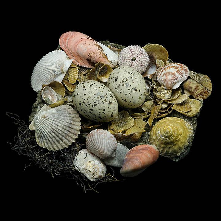 caspian tern sharon beals 25 Stunning Photographs of Birds Nests