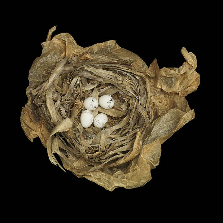 common yellow throat sharon beals 25 Stunning Photographs of Birds Nests