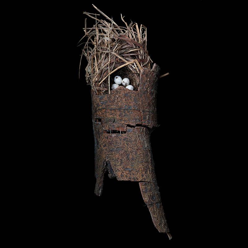 25 Stunning Photographs of Birds'Nests