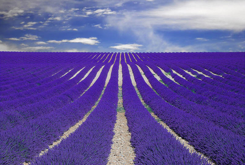 purple lavender field provence france 25 Pictures of Life Captured by Google Street View