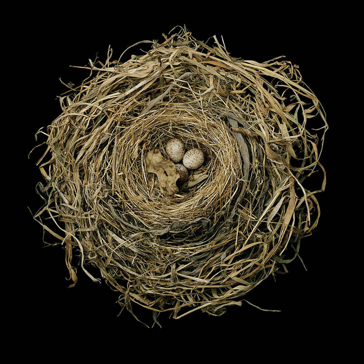 25 Stunning Photographs of Birds' Nests «TwistedSifter