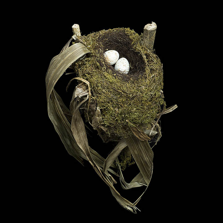 spotted nightingale thrush sharon beals 25 Stunning Photographs of Birds Nests