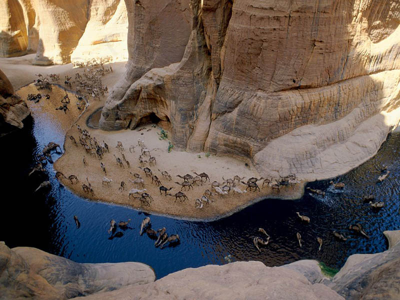 Picture of the Day: Camel Caravan at an Oasis