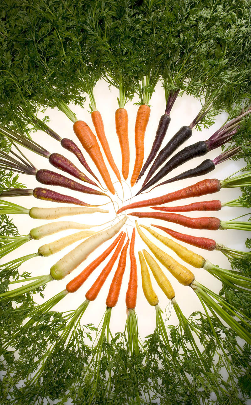 carrot wheel colors rainbow Picture of the Day: Rainbow Carrot Wheel