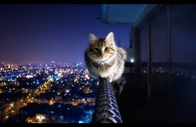 cat siting on ledge of balcony Picture of the Day: Courageous Kitty