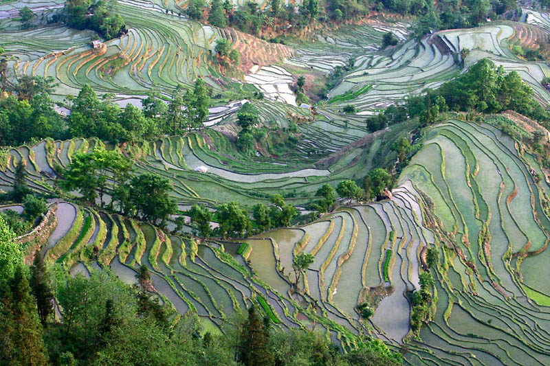 rice terraces 10 25 Unbelievable Photographs of Rice Terraces
