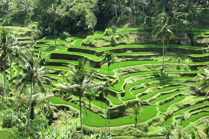 rice terraces 11 25 Unbelievable Photographs of Rice Terraces
