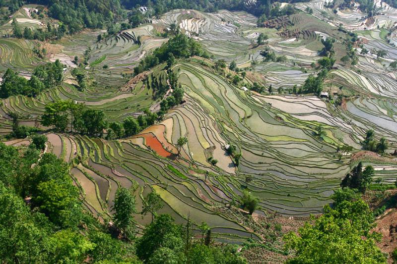 rice terraces 12 25 Unbelievable Photographs of Rice Terraces
