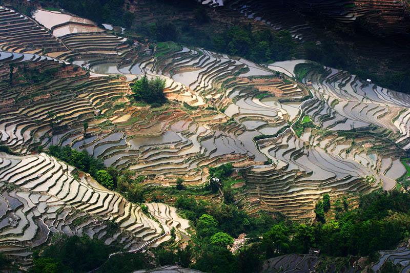 rice terraces 13 25 Unbelievable Photographs of Rice Terraces