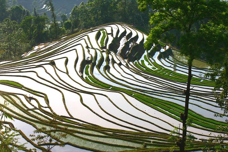 rice terraces 14 25 Unbelievable Photographs of Rice Terraces
