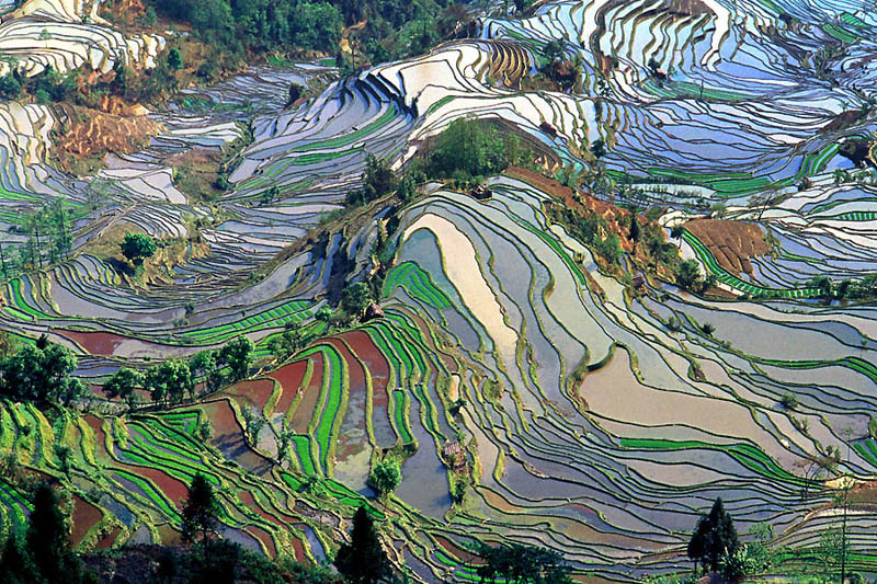 rice terraces 2 25 Unbelievable Photographs of Rice Terraces