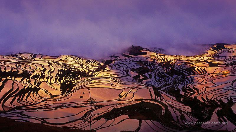 rice terraces 21 25 Unbelievable Photographs of Rice Terraces