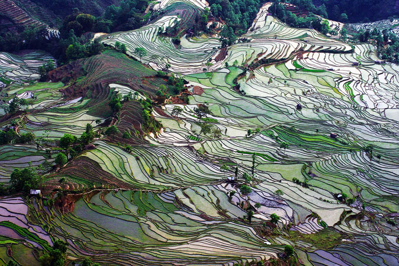 rice terraces 4 25 Unbelievable Photographs of Rice Terraces
