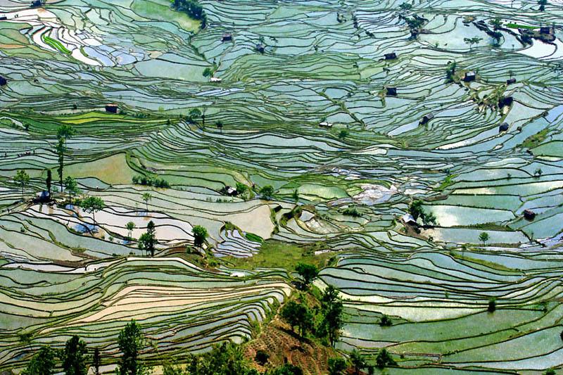 rice terraces 5 25 Unbelievable Photographs of Rice Terraces