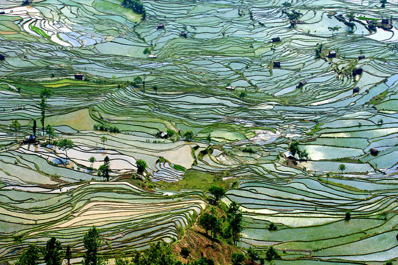 rice terraces 5 25 Unbelievable Photographs of Rice Terraces