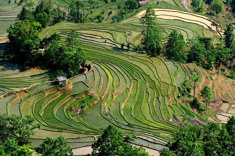 rice terraces 6 25 Unbelievable Photographs of Rice Terraces