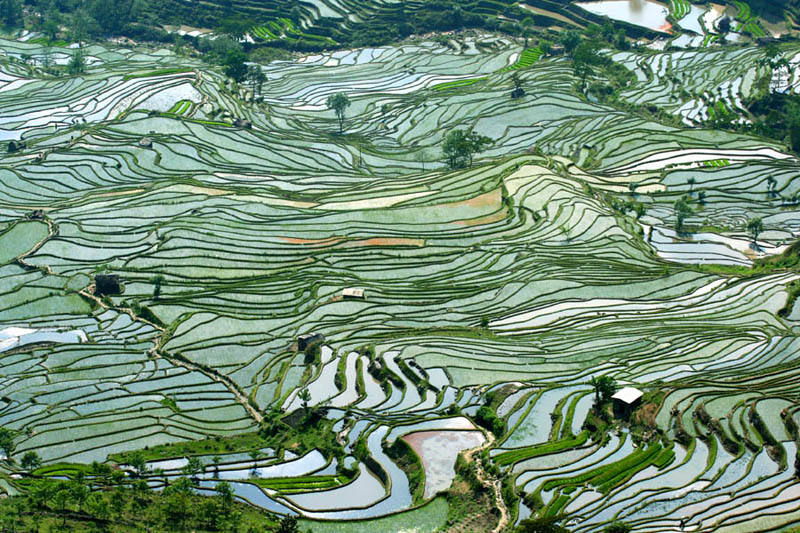 rice terraces 8 25 Unbelievable Photographs of Rice Terraces