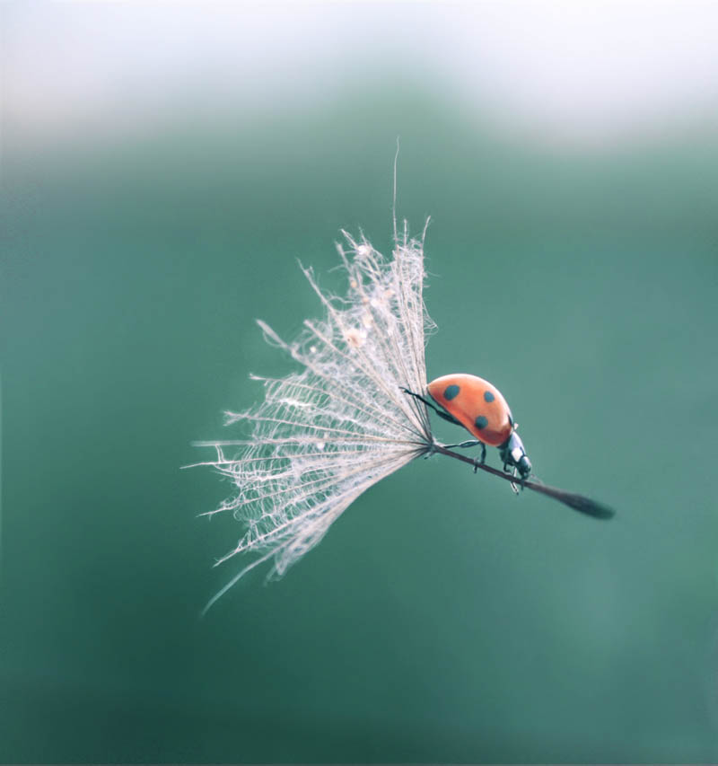 ladybug landing with style The Top 50 Pictures of the Day for 2011