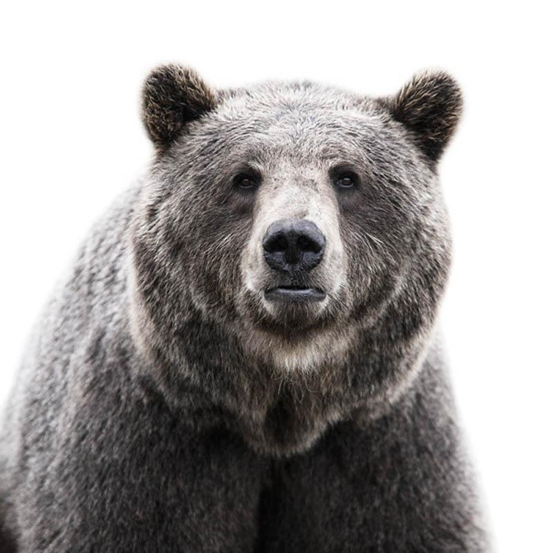 animal portraits by morten koldby 12 Amazing Animal Portraits by Morten Koldby