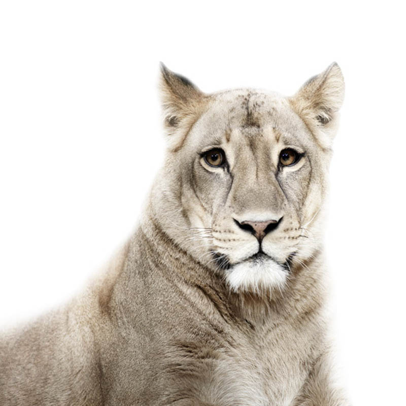 animal portraits by morten koldby 14 Amazing Animal Portraits by Morten Koldby