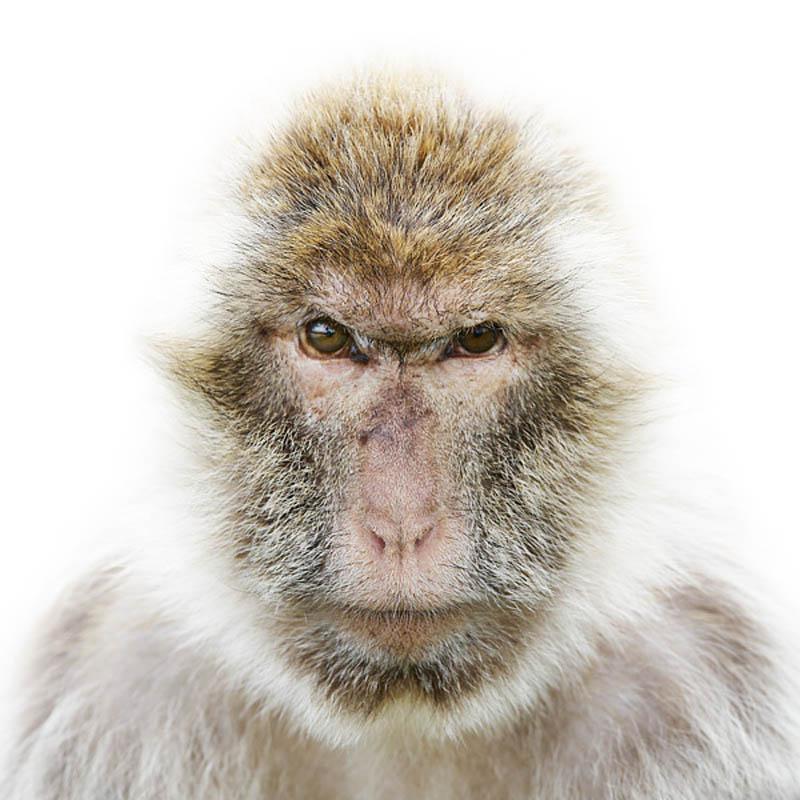 animal portraits by morten koldby 15 Amazing Animal Portraits by Morten Koldby