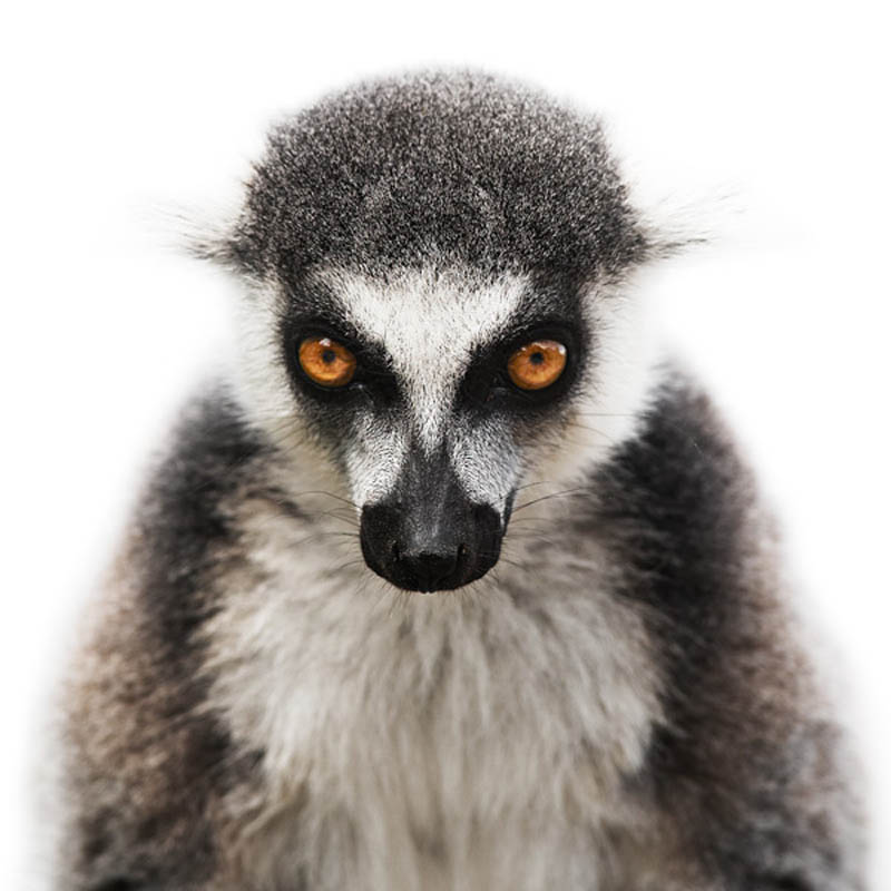 animal portraits by morten koldby 2 Amazing Animal Portraits by Morten Koldby