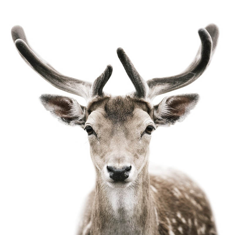 animal portraits by morten koldby 5 Amazing Animal Portraits by Morten Koldby